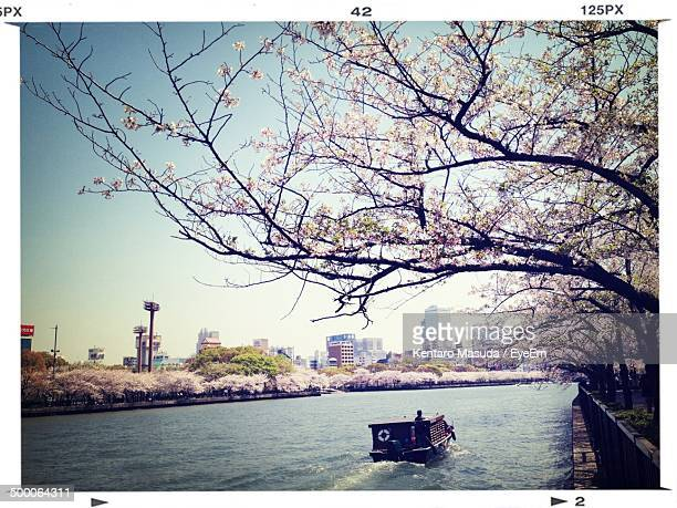 Cherry blossom tree above boat in canal