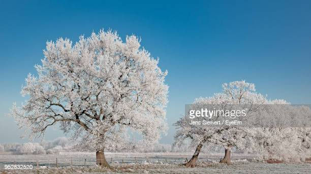 cherry blossom tree on field against blue sky - jens siewert stock-fotos und bilder