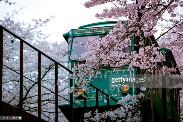桜の旅 - 茨城県 ストックフォトと画像