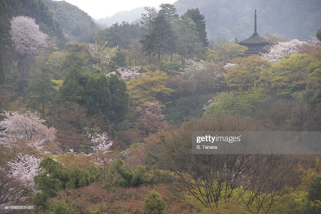 Cherry blossom with Kiyomizudera Temple in mountains : Foto stock