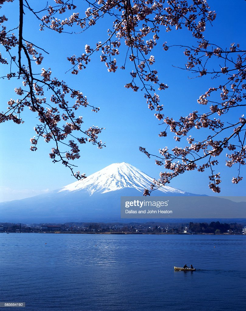 Cherry blossom with Mount Fuji and Lake Kawaguchi in background, Fuji-Hakone-Izu National Park, Japan : Stock Photo