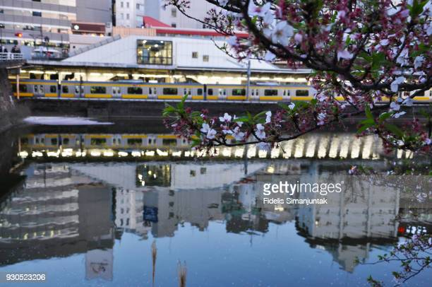 Cherry blossom with Tokyo cityscape reflection on Kanda river in front of Ichigaya Station