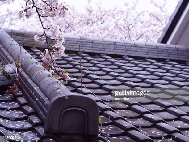 cherry blossoms and black tiled roof - 屋根 stock pictures, royalty-free photos & images