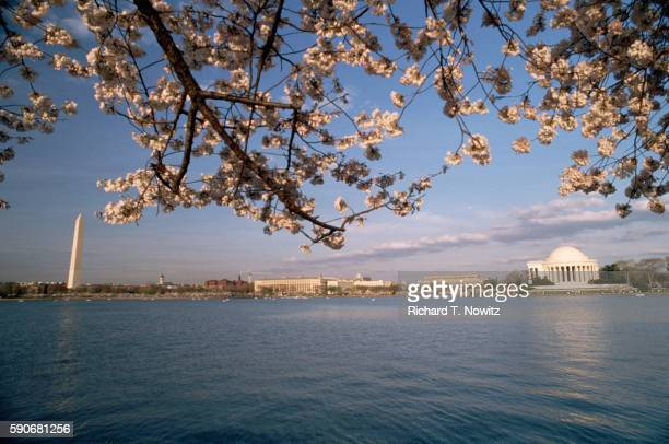 Cherry Blossoms and Monuments Across the Tidal Basin
