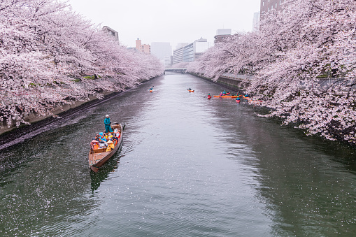 Cherry blossoms and tourists in the boat on the Sumida river at rainy day, Koto ward, Tokyo, Japan, Spring. - gettyimageskorea