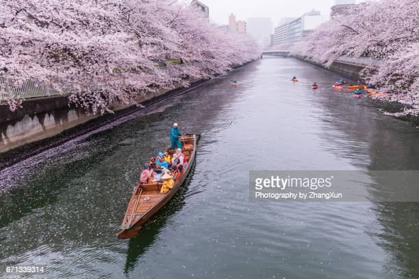 Cherry blossoms and tourists in the boat on the Sumida river at rainy day, Koto ward, Tokyo, Japan, Spring.