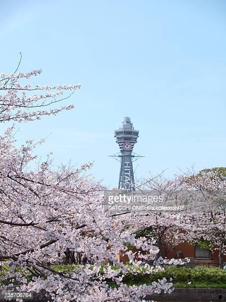 cherry blossoms and tsutenkaku tower, osaka prefecture, honshu, japan - 通天閣 ストックフォトと画像
