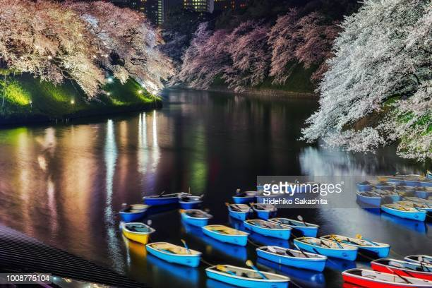 cherry blossoms at chidorigafuchi - cherry blossom in full bloom in tokyo stock pictures, royalty-free photos & images