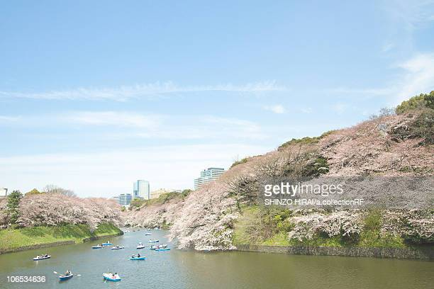 cherry blossoms at chidorigafuchi, tokyo prefecture, honshu, japan - moat stock pictures, royalty-free photos & images