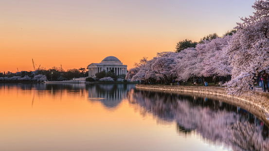 Cherry Blossoms at dawn with Jefferson Memorial reflected in Tidal Basin, Washington DC - gettyimageskorea