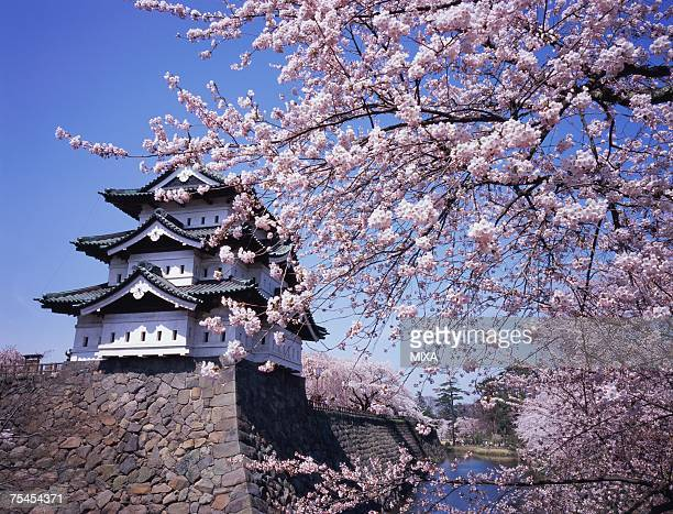 cherry blossoms at hirosaki castle - hirosaki castle stock pictures, royalty-free photos & images