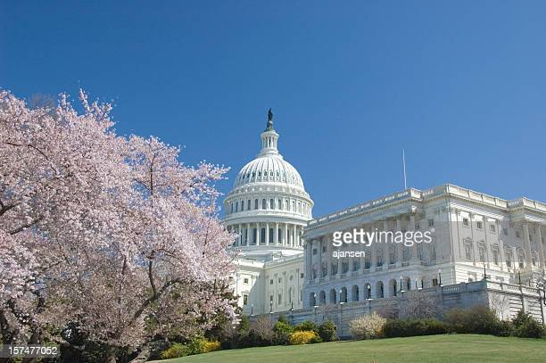 Cherry blossoms at the exterior of Capitol Hill