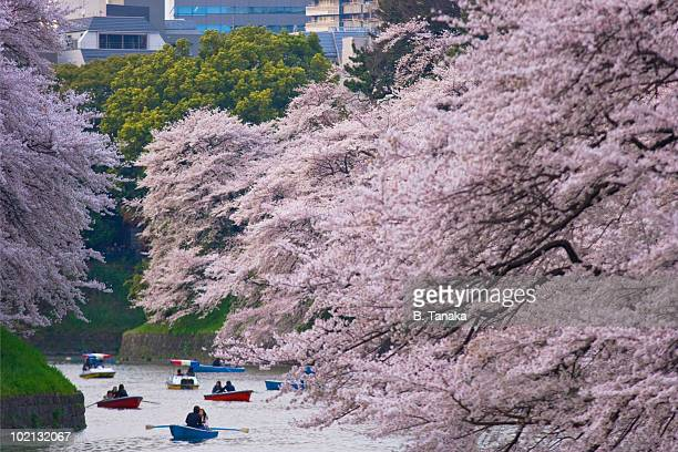 cherry blossoms at tokyo's imperial palace - imperial palace tokyo stock pictures, royalty-free photos & images