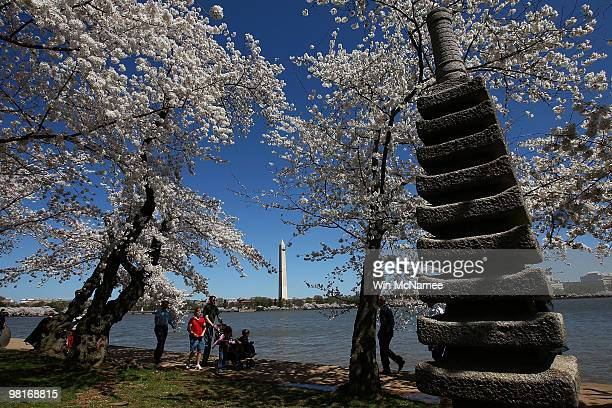 Cherry blossoms begin their annual blooming season near a Japanese sculpture and the Washington Monument March 31 2010 in Washington DC The cherry...