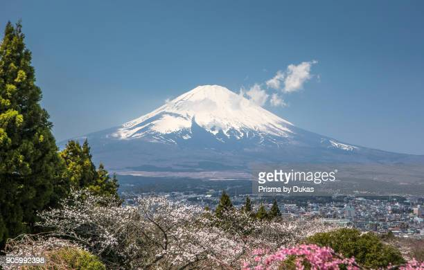 Cherry Blossoms colorful colors flowers Fuji Gotemba City japan landscape Mount Fuji no people spring tourism travel