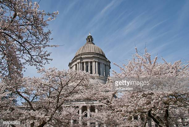 Cherry Blossoms in Bloom at the Washington State Capitol
