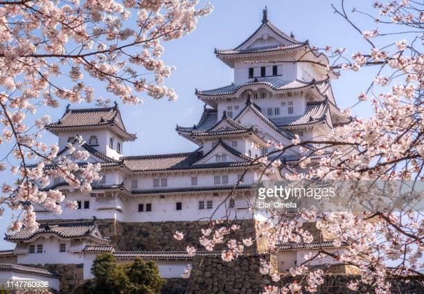cherry blossoms in full bloom at himeji-jo castle, japan - japão imagens e fotografias de stock