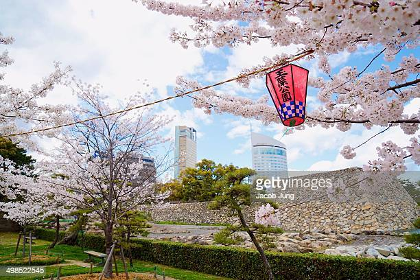 CONTENT] Cherry blossoms in Tamomo Park against a backdrop of the ruins of Takamatsu Castle skyscrapers and a red lantern that says Tamamo Park
