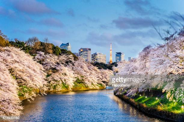 cherry blossoms in tokyo with tokyo tower on background - tokyo japan stock pictures, royalty-free photos & images