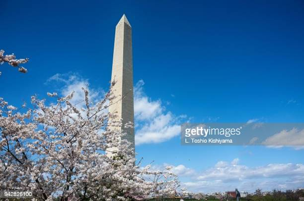 cherry blossoms in washington, dc - national monument stock pictures, royalty-free photos & images