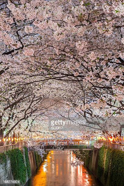 Cherry Blossoms Party