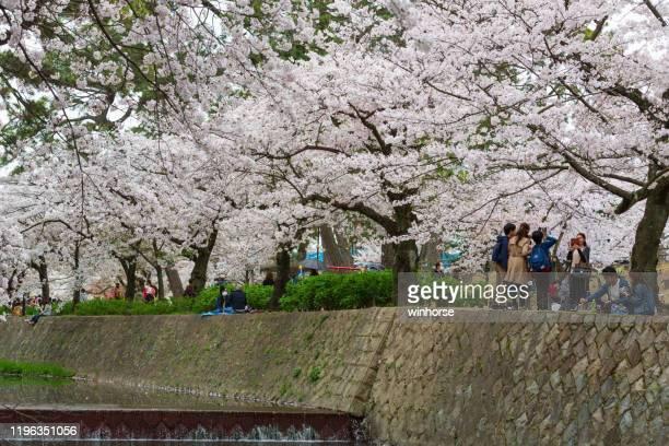 日本の桜の季節 - 西宮市 ストックフォトと画像
