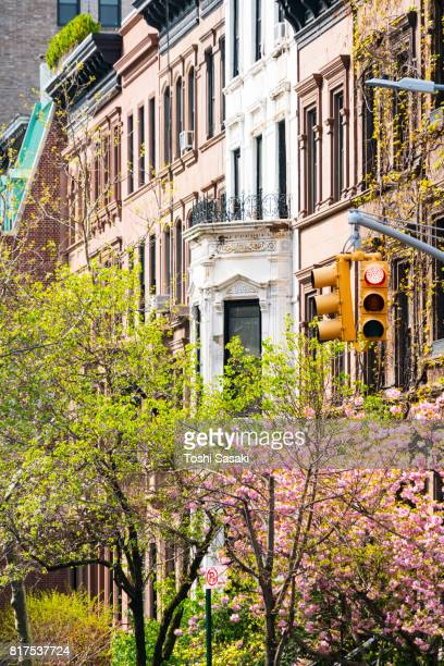 Cherry blossoms tree and fresh green trees at front of rows of Upper Manhattan residential buildings at New York City. Traffic signal stands at Madison Avenue.