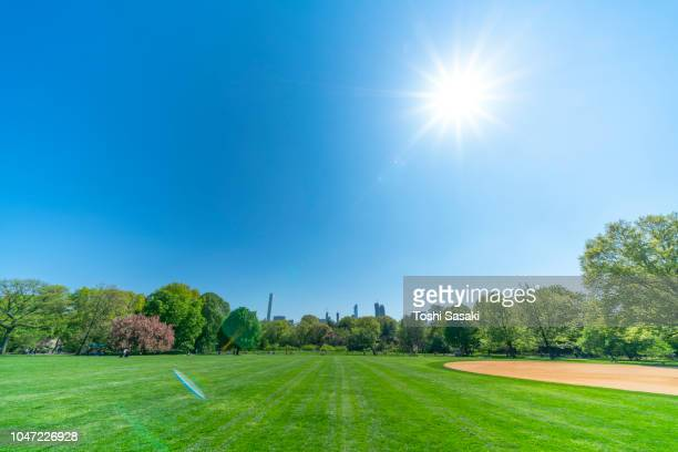 cherry blossoms trees and fresh green trees are growing and illuminated by sunlight under the clear blue sky at great lawn central park new york usa on may 08 2018. - 澄んだ空 ストックフォトと画像