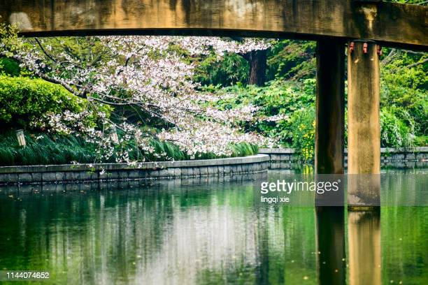 Cherry blossoms under the bridge in Hangzhou West Lake Scenic Area