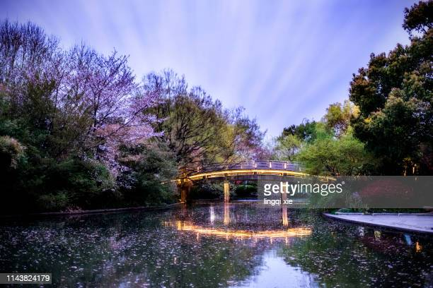 cherry blossoms under the night of hangzhou west lake - oxford england stock pictures, royalty-free photos & images