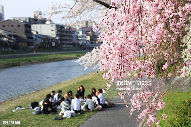 cherry blossoms viewing party - hanami stock pictures, royalty-free photos & images