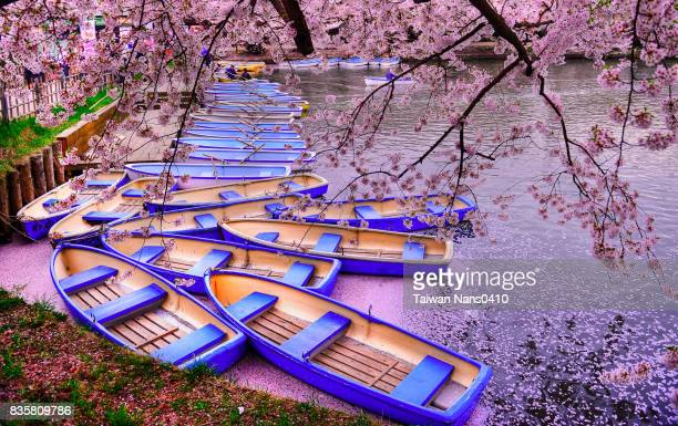 cherry deck - aomori prefecture stock pictures, royalty-free photos & images