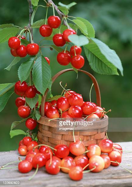 cherry - new cherry stock pictures, royalty-free photos & images