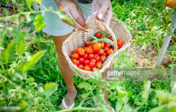 Cherry tomato in basket