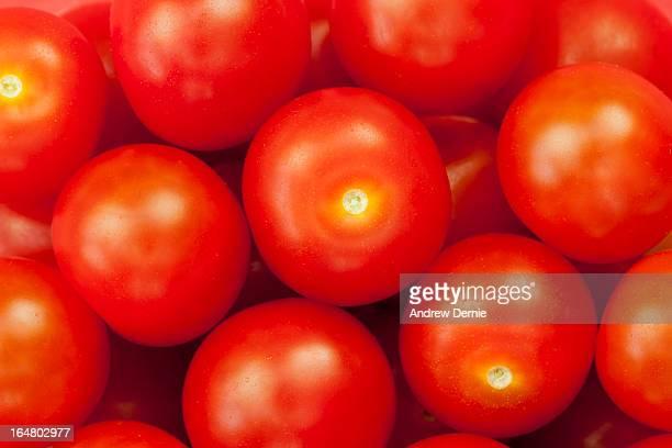 cherry tomatoes - andrew dernie - fotografias e filmes do acervo