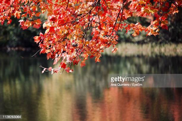 Cherry Tree By Lake During Autumn