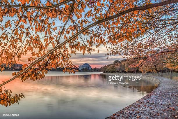 Cherry trees along tidal basin