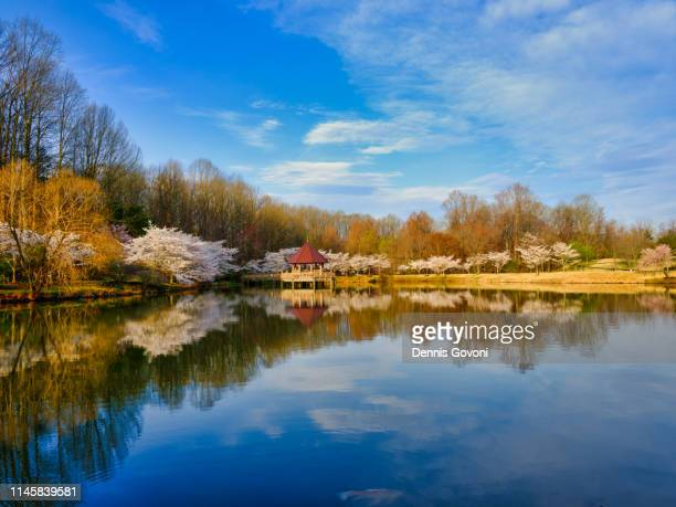 cherry trees and gazebo - fairfax county virginia stock photos and pictures