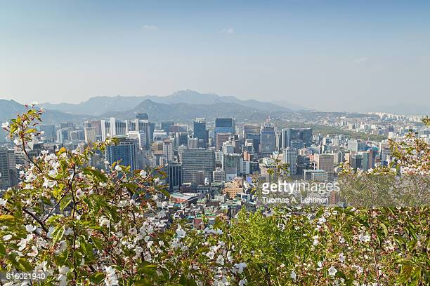 Cherry trees and view of the downtown in Seoul