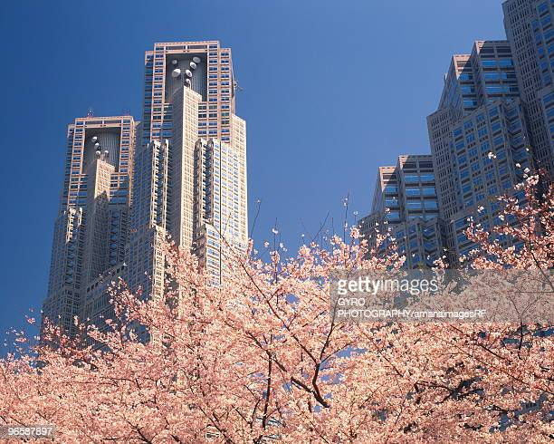Cherry trees blossoming in front of city skyscrapers, Shinjuku-Ku, Tokyo, Japan
