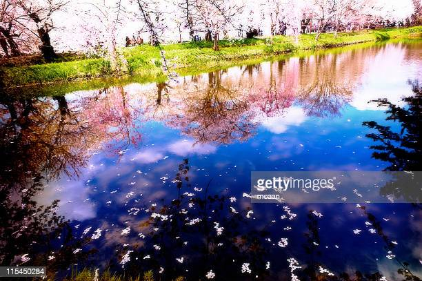 cherry trees reflection - hirosaki stock pictures, royalty-free photos & images