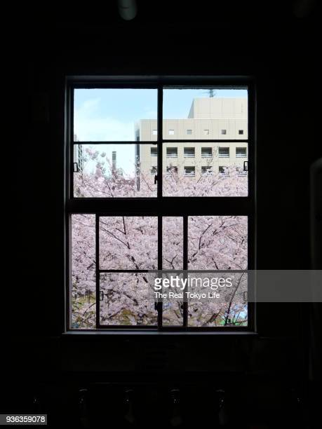 cherry_blossom_window_P1080307.jpg