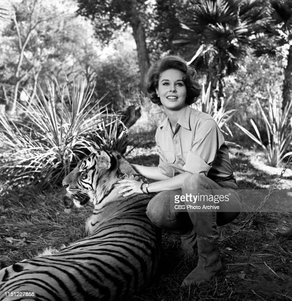 Cheryl Miller stars as Paula Tracy in Daktari a CBS television African adventure series Image dated October 28 1965