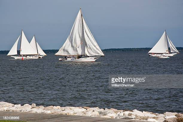 chesapeake bay skipjack race - chesapeake bay stock pictures, royalty-free photos & images