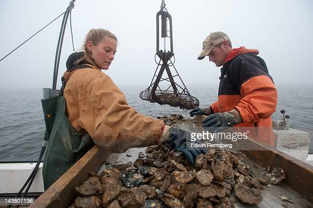 chesapeake bay watermen at work. - chesapeake bay stock pictures, royalty-free photos & images