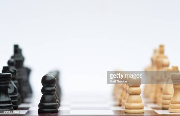 chess game of strategy business concept application - queensland umbrella tree stock pictures, royalty-free photos & images