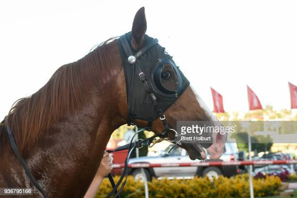 Chess Star after winning the Simpson Construction Valley Pearl at Moonee Valley Racecourse on March 23 2018 in Moonee Ponds Australia