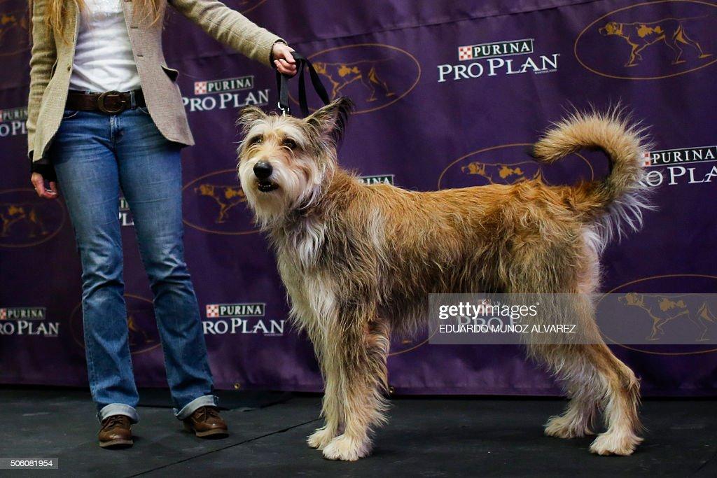 US-ENTERTAINMENT-DOG-SHOW : News Photo