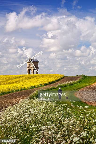 chesterton windmill dog walker - chesterton stock photos and pictures