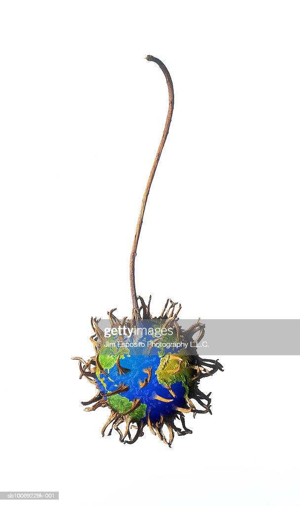 Chestnut burs on globe : Stockfoto